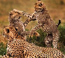 10 Day Kenya Safari Package