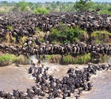 12 Day Kenya- Tanzania Safari