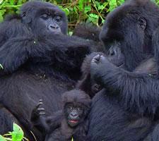 12 Day Kenya- Uganda Safari