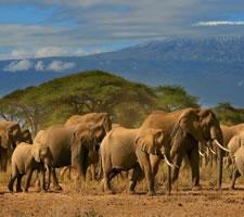 4 Day Masaai Mara and Amboseli