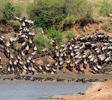 5 Day Masaai Mara and Amboseli