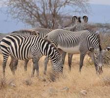 7 Day Amazing Kenya Safari