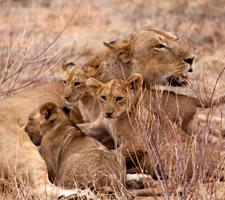 9 Day Kenya Safari Vacation