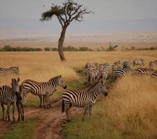 Visit Masaai Mara National Reserve in Kenya